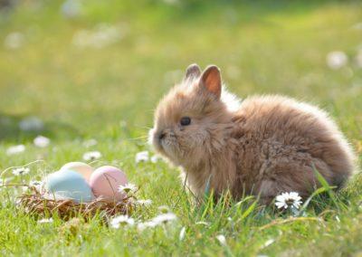 12.04.2020 – Der Osterhase kommt!